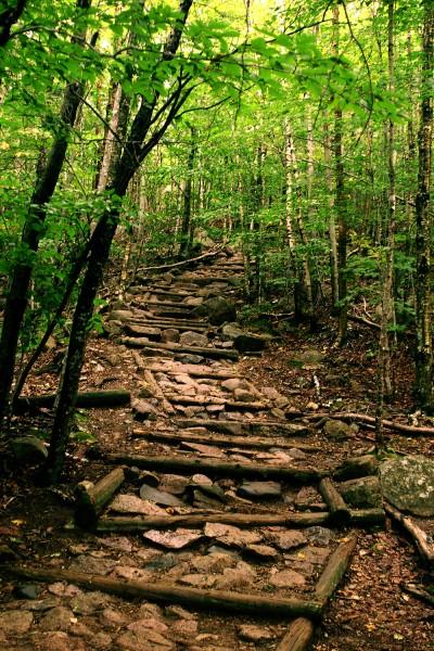 walk-through-woods-400x600